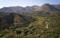 Aerial view on olive groves on the hils and mountain slopes. Crete, Greece.