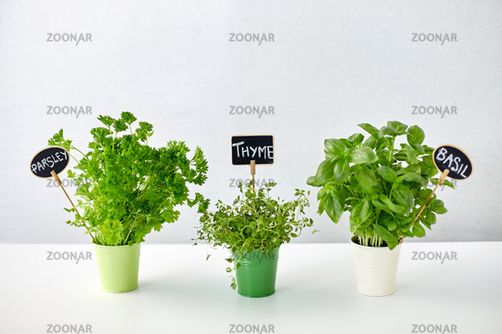 greens or herbs in pots with name plates on table