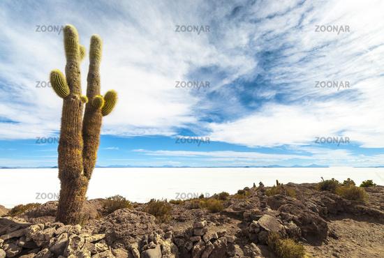 Cactus in Salar de Uyuni