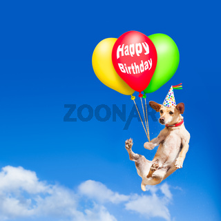 dog hanging on balloon in  air at birthday party