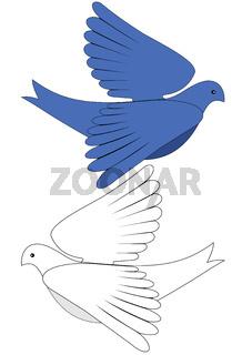 Blue and white dove