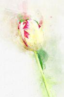 Flower Yellow tulips. Stylization in watercolor drawing.
