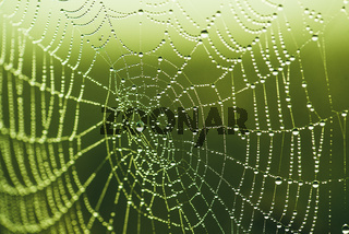 Close-up of a web with dew drops. Morning spring photo in nature. Selective focus macro shot with shallow depth of field