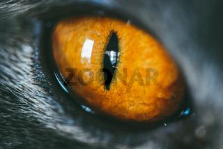 Close-up of an orange cat's eye. Selective focus macro shot with shallow DOF