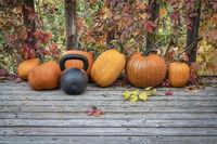 pumpkins and kettlebell in backyard