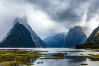 Swampy coast of the Milford Sound