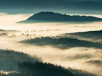 Fog flowing  over forest valley. Misty mountain landscape