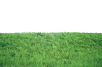 Green grass on hill isolated on white background