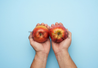 two male hands hold a ripe red apple on a blue background