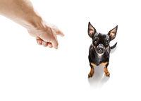 owner punishing his dog