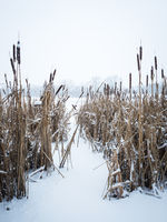 Lake in winter with snow on reed and ice