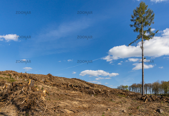 Forest dieback in the Harz Mountains Forestry