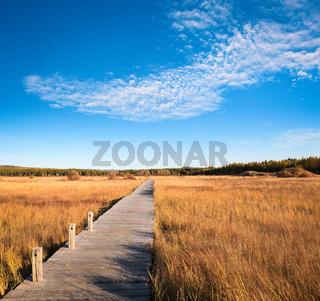 beautiful wetland park in autumn