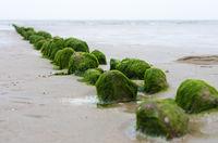 Algae on a stone-border