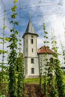 Chapel with hop field, Kressbronn, Lake Constance Baden-Wuerttemberg, Germany