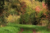 Natural reserve Bruchwiesen