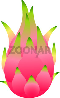 Dragon fruit, pitahaya. Healthy eating. Exotic tropical fruit. Vector illustration isolated on white.