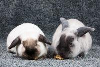 Rabbits Eating On Isolated Background