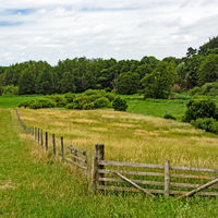 Landscape in Mecklenburg-Western Pomerania with meadows and fence, Germany