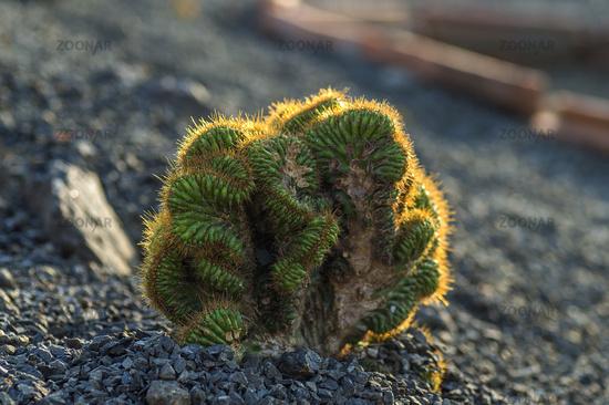 Cactus plant in park