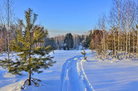 Mountain winter forest landscape at bright sunny day
