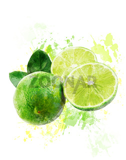 Watercolor Image Of  Fresh Limes