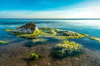 Green algae moving in the clear water of the baltic sea