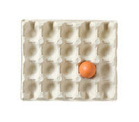 One brown egg in carton isolated on white