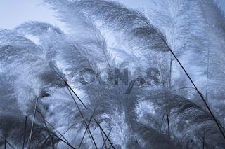 Dunkelblauer floraler Hintergrund