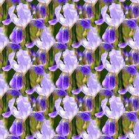 Seamless abstract springings, summer natural background of blooming irises.