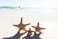 Three starfish on sandy beach