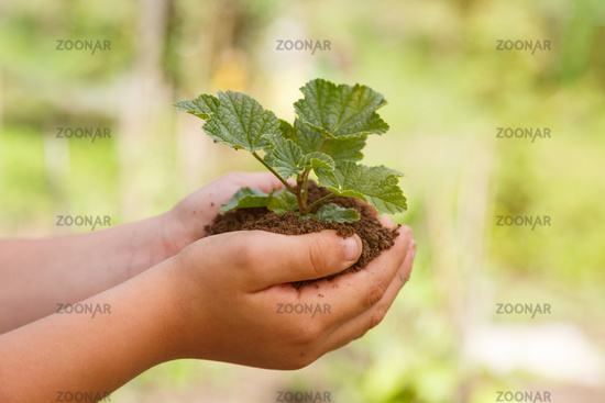 Child hands holding plant new life concept nature living garden small tree