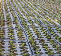 lots of potted seedlings