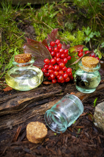 Essence of Viburnum on natural background in a beautiful small glass bottles