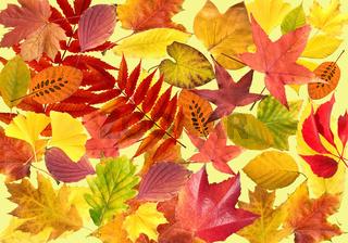 Herbstblaetter; bunt, leuchtend,