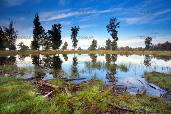 little wild lake in morning