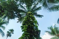 Low angle view on tropical green plants with palm tree trunk grown, Yucatan, Mexico