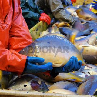 Abfischen - to fish dry 14