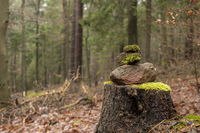 Signpost of sandstones placed on the forest floor with pine needles and moss against a blurred backg