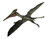 Pterodactylus prehistoric bird flying - 3D render