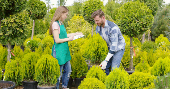 Man and woman professional gardeners with small potted tree in the garden