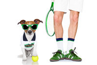 dog tennis ball player
