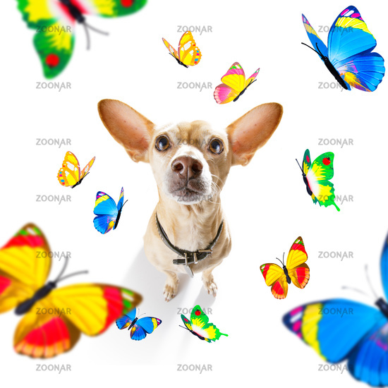 butterflies and  a dog in love