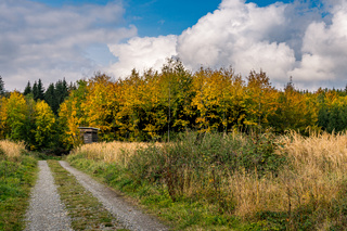 beautiful autumn hike in the colorful forest near wilhelmsdorf