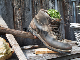 Old hiking shoe with a plant as a decoration