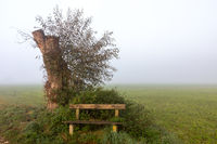 Foggy resting place at Paar river near Schrobenhausen, Bavaria, Germany in autumn