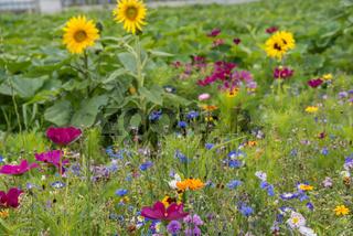 blühende Naturwiese unterstützt Artenschutz und Insektennahrung