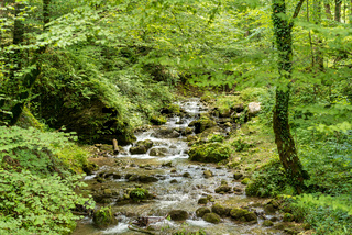 Gebirgsbach in den oberösterreichischen Voralpen. Der Bach mündet in die Enns