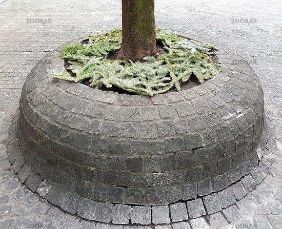 tree trunk in cobblestone
