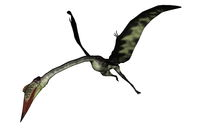 Quetzalcoatlus flying head down - 3D render
